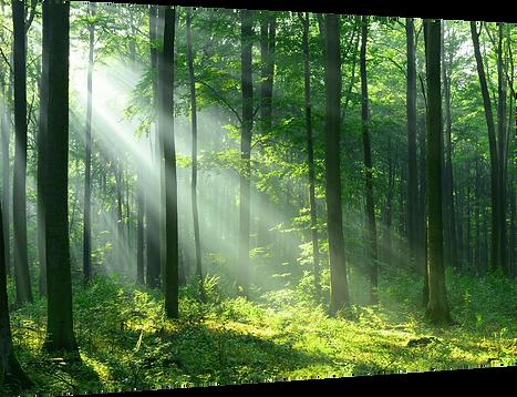 豊かな自然の恵みである天然木を素材に使っている