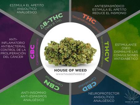 Efectos Terapéuticos de los Principales Cannabinoides
