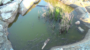 Frog Pool -- Svaneke (6:00)