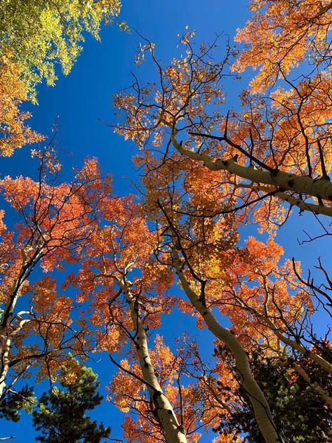 Aspen Fall Beauty by Kenneth Wilson