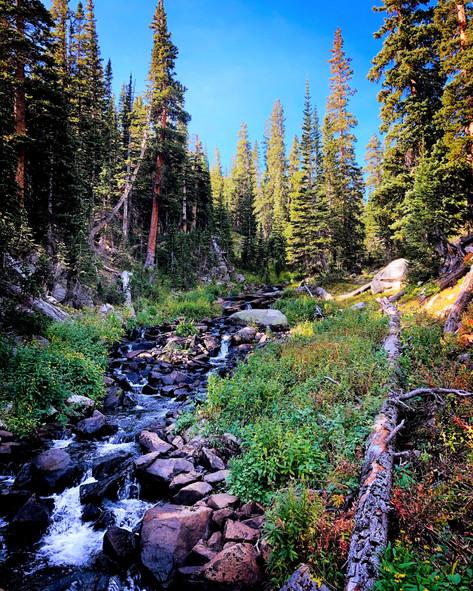 Mountain Stream by Jenna Hoerr