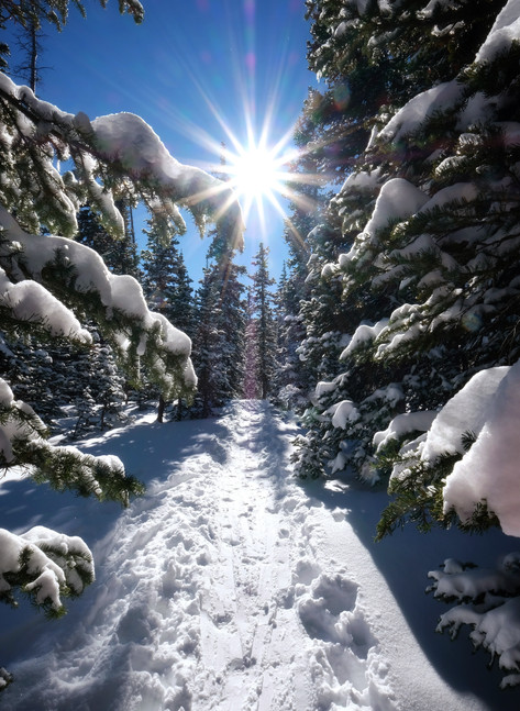 Winter Wonderland Trail by Mary White