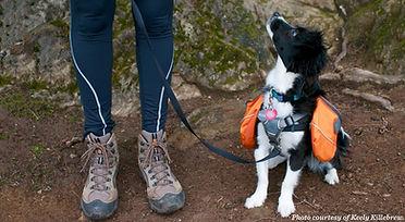 Kona_hiking_with_dogs.jpg