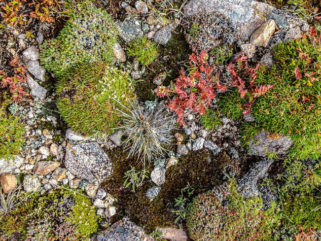 Alpine Tundra by Margo MacDonnell