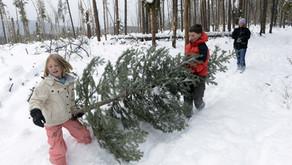 USFS Boulder Ranger District Update: Christmas Tree Permits