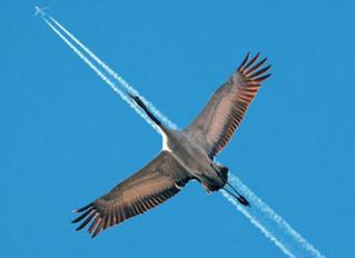 "Look! Is it a bird? Is it a plane? No it's the ""CDO"""