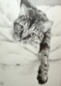 cat drawing by Meliss Barbee
