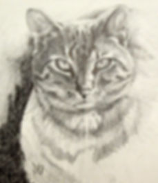 cat drawing by Melissa Barbee