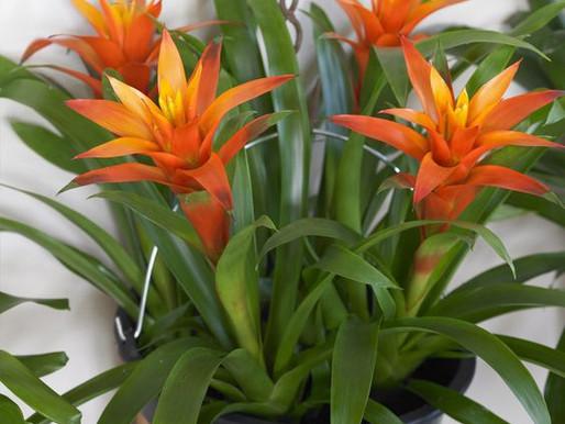 5 flores fáceis de cultivar em casa