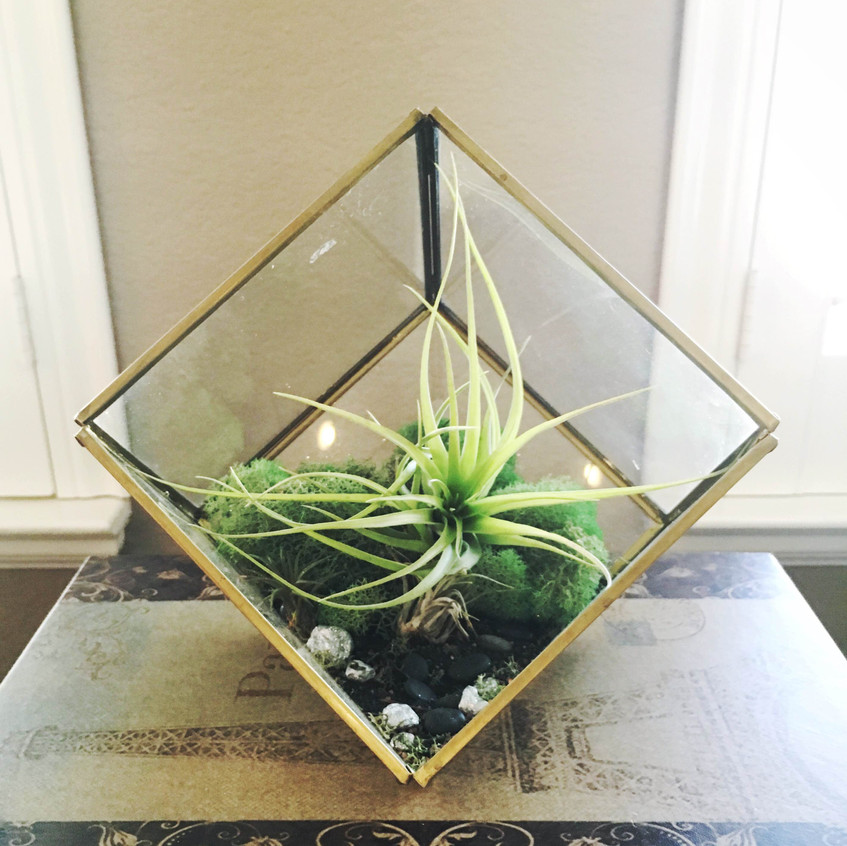 Succulents are a great way to add interest to a neutral space.