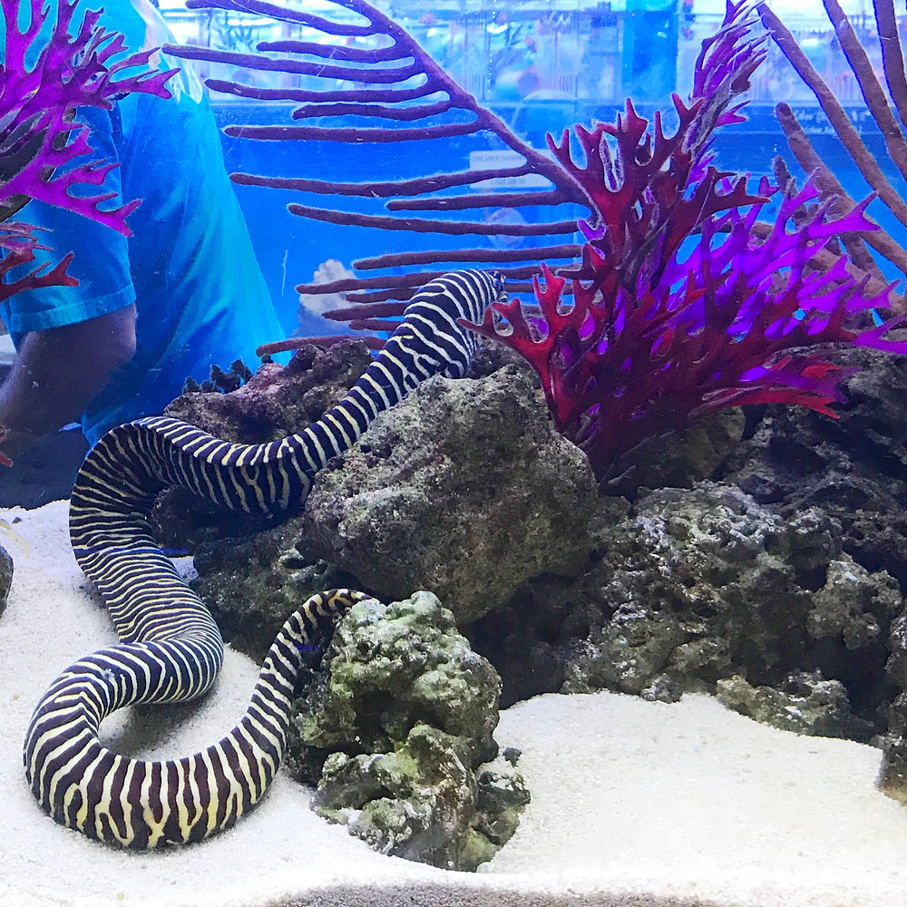 Aquatic Warehouse Aquarium