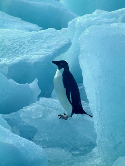Images of the Antarctic 5