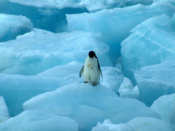 Images of the Antarctic 6