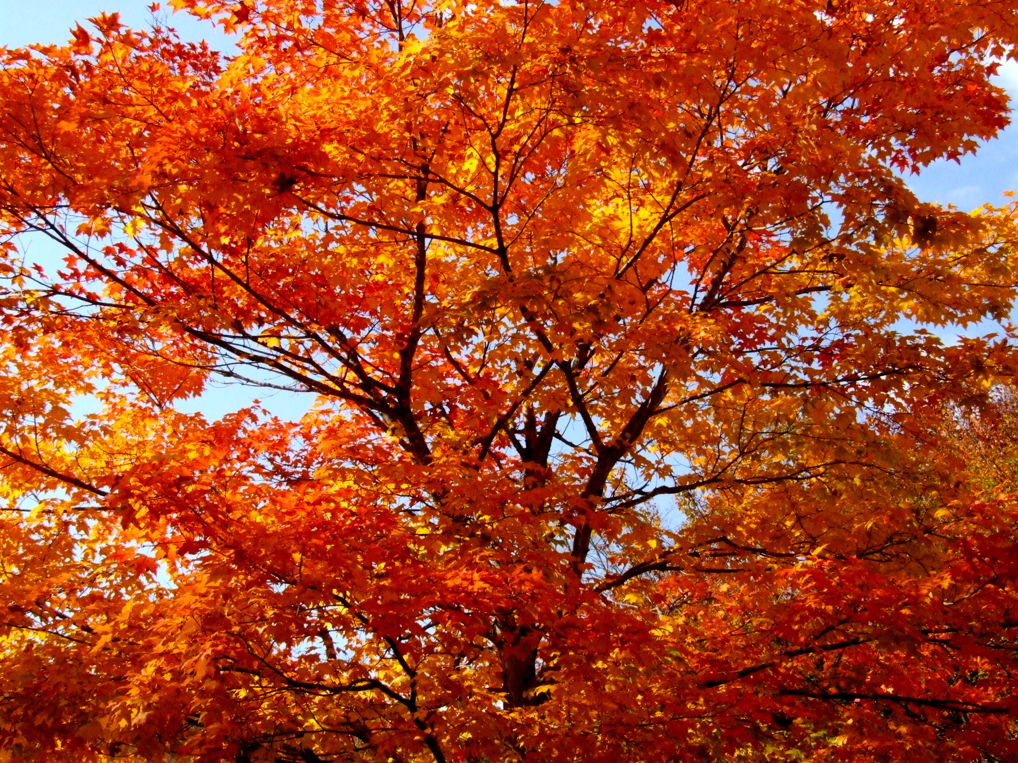 Colours of New England 7