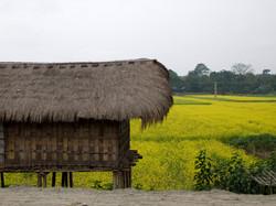 Farmhouse on Stilts