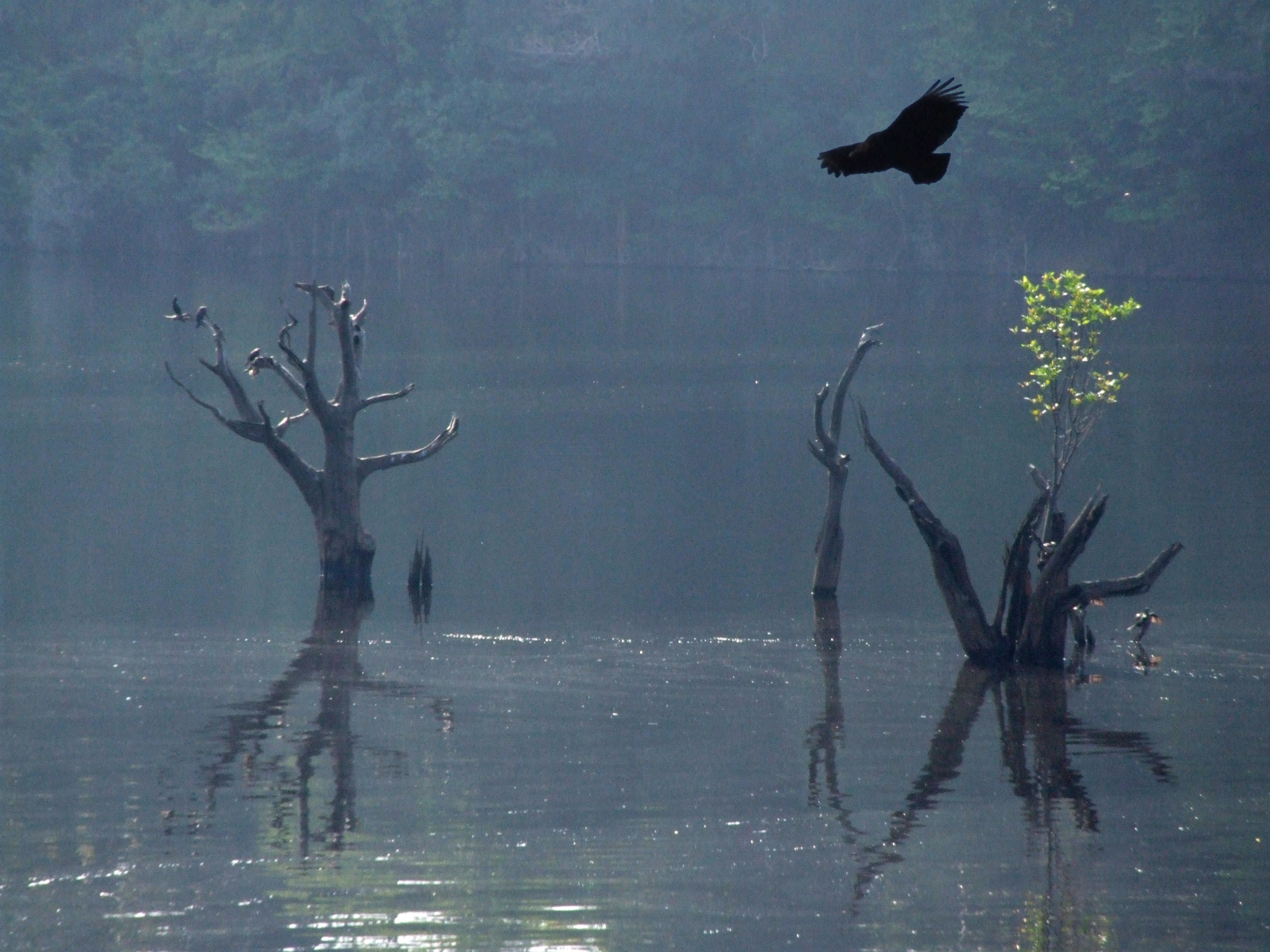 The flooding Amazon