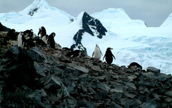 Images of the Antarctic 10