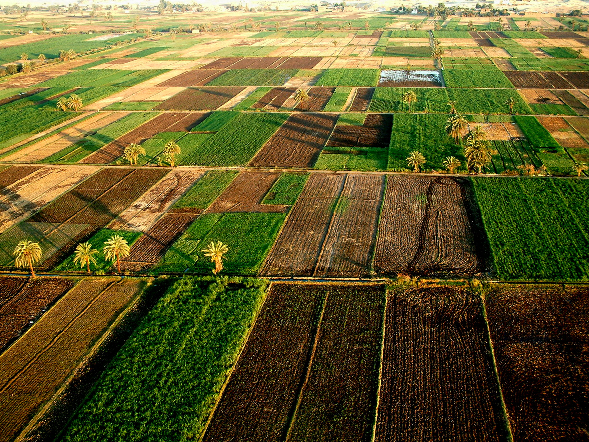 Farm land in Egypt