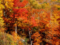 Colours of New England 5