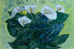 Study of lilies