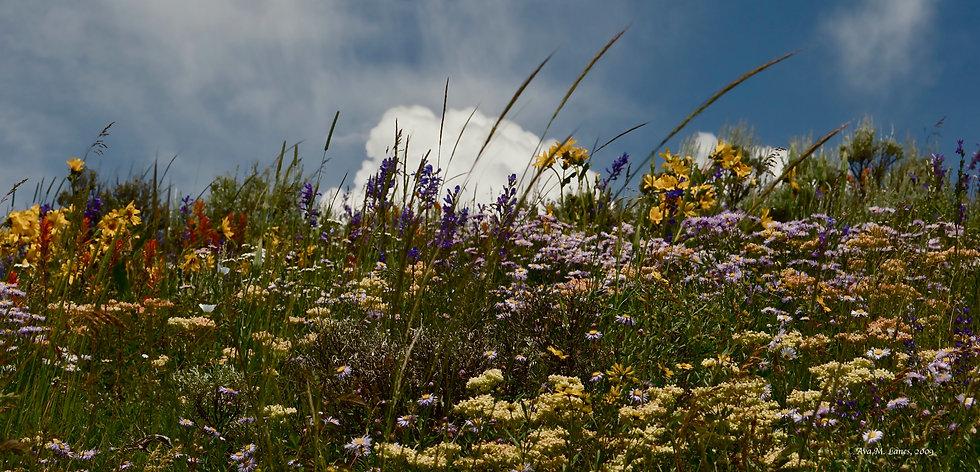 Wildflowers In Cloud-view