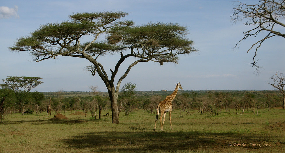 In The Serengeti