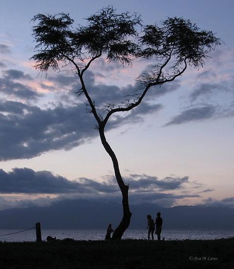 Hawaiian Silhouette