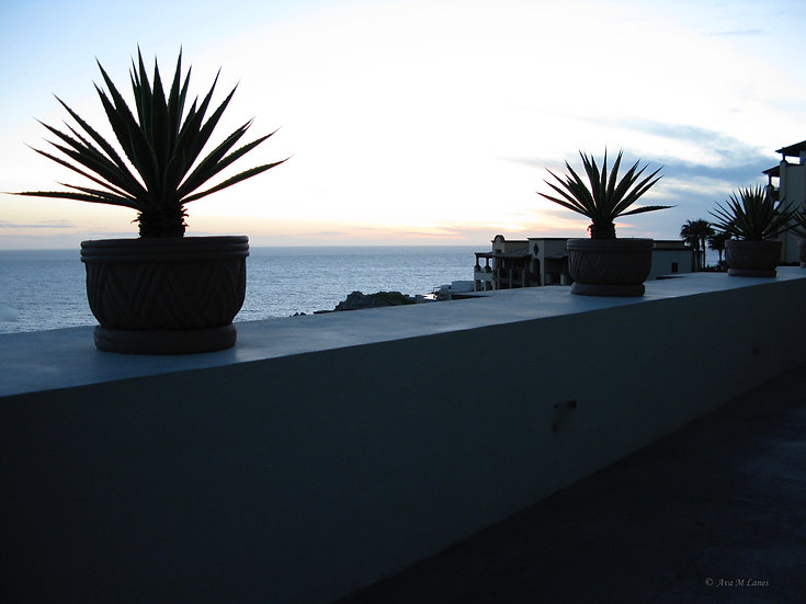 Yucca Shadows