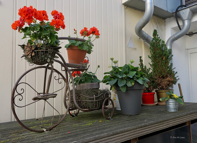 Geranium Bike