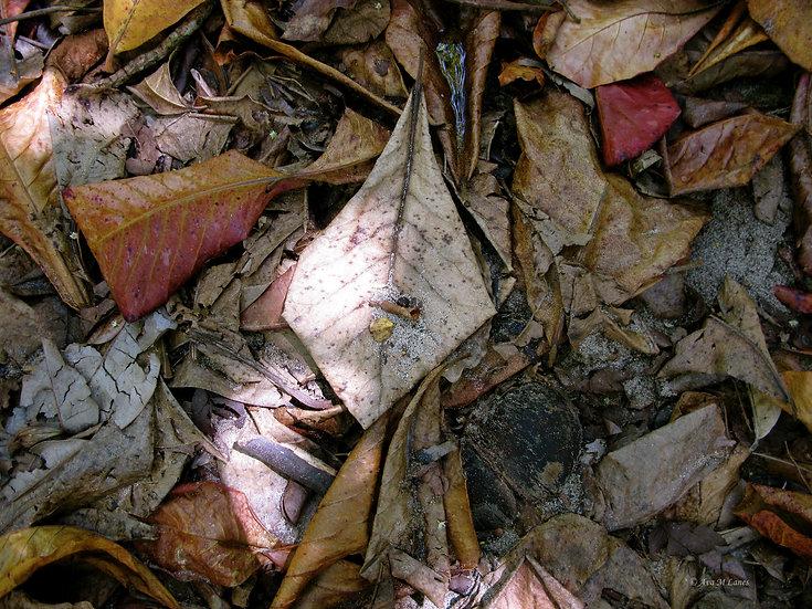 Sand Leaves