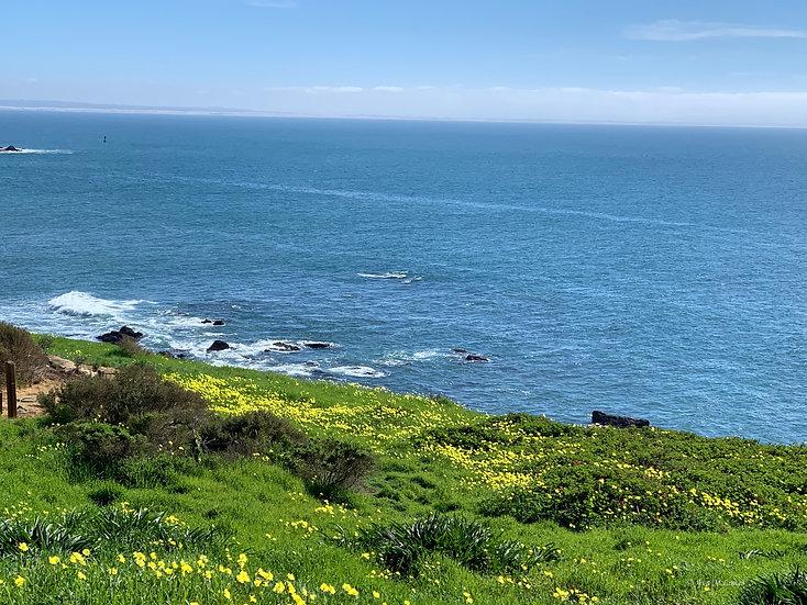 Blooms Along the Ocean