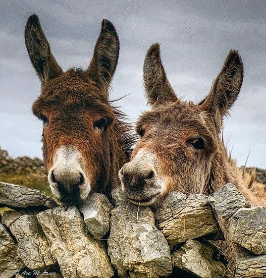 Smiling Donkeys