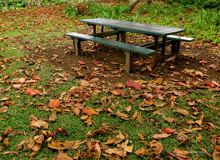 Fall Leaves & Green Bench