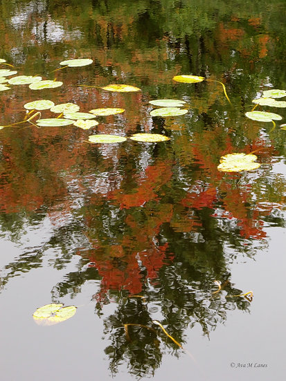 Lilly Pads II