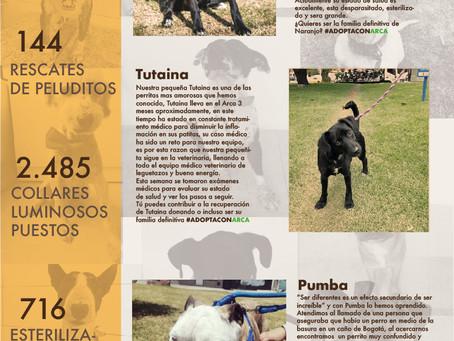 Febrero en Arca, muchos perritos negros y un rescate sin precedentes...