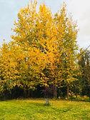 Fall colors in Glen Sobey's yard
