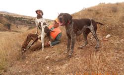 B2B Bird Hunting Dogs