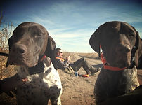 Border to Border Outfitters, B2B Outfitters, Border to Border Hunting Dogs