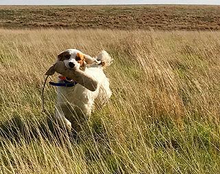 Bird Hunting Dog, Pace