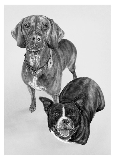 pet portrait print.jpg