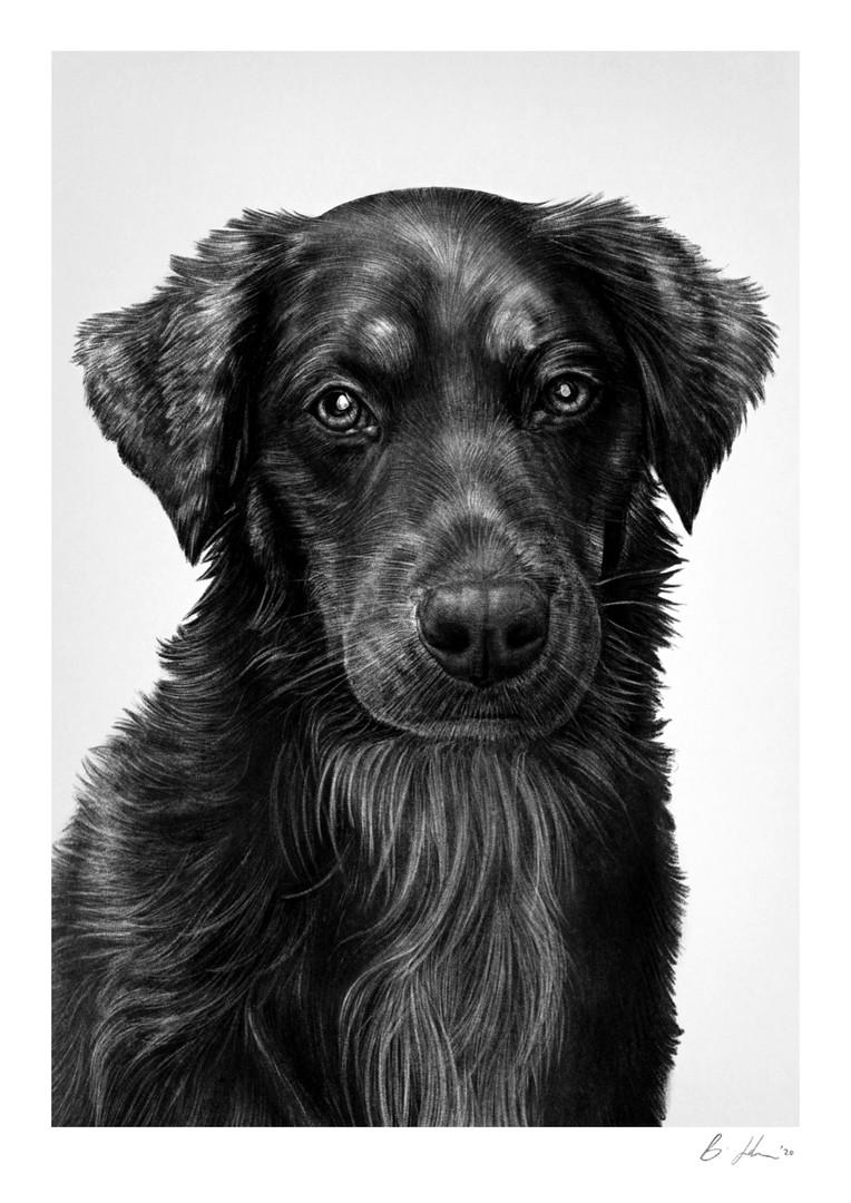nichole pet portrait.jpg