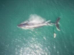 Whale3_edited.jpg