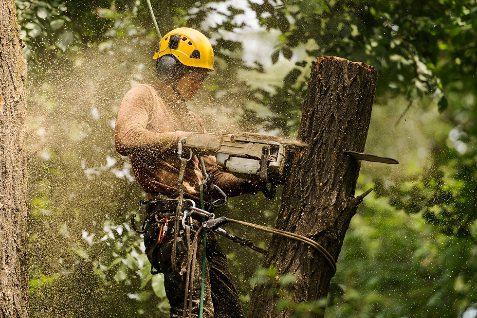 An arborist cutting a tree with a chains