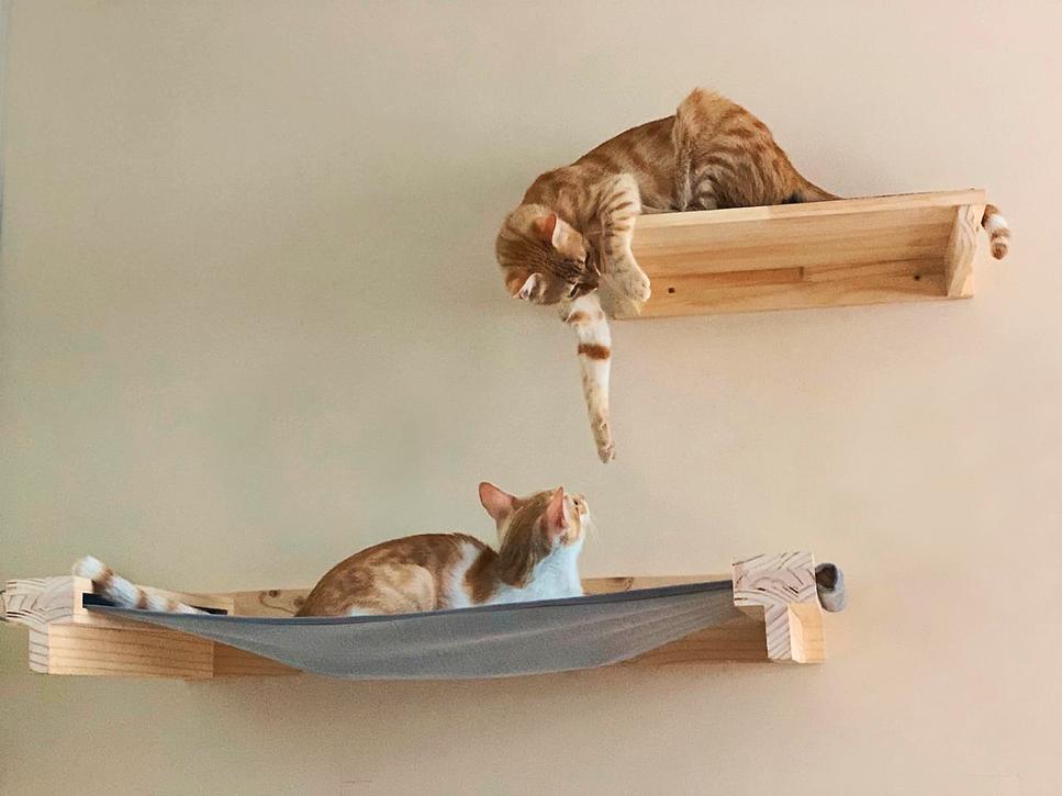 FOTO 2 gatos.png