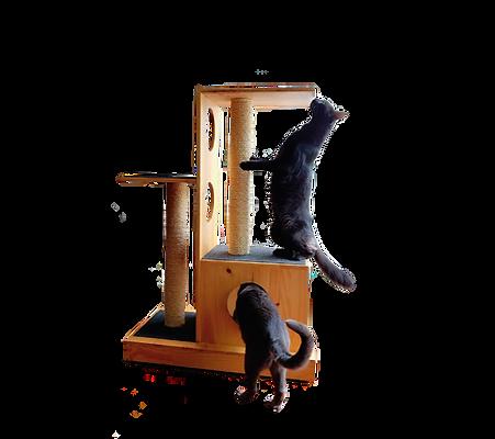 accesorio de gatos