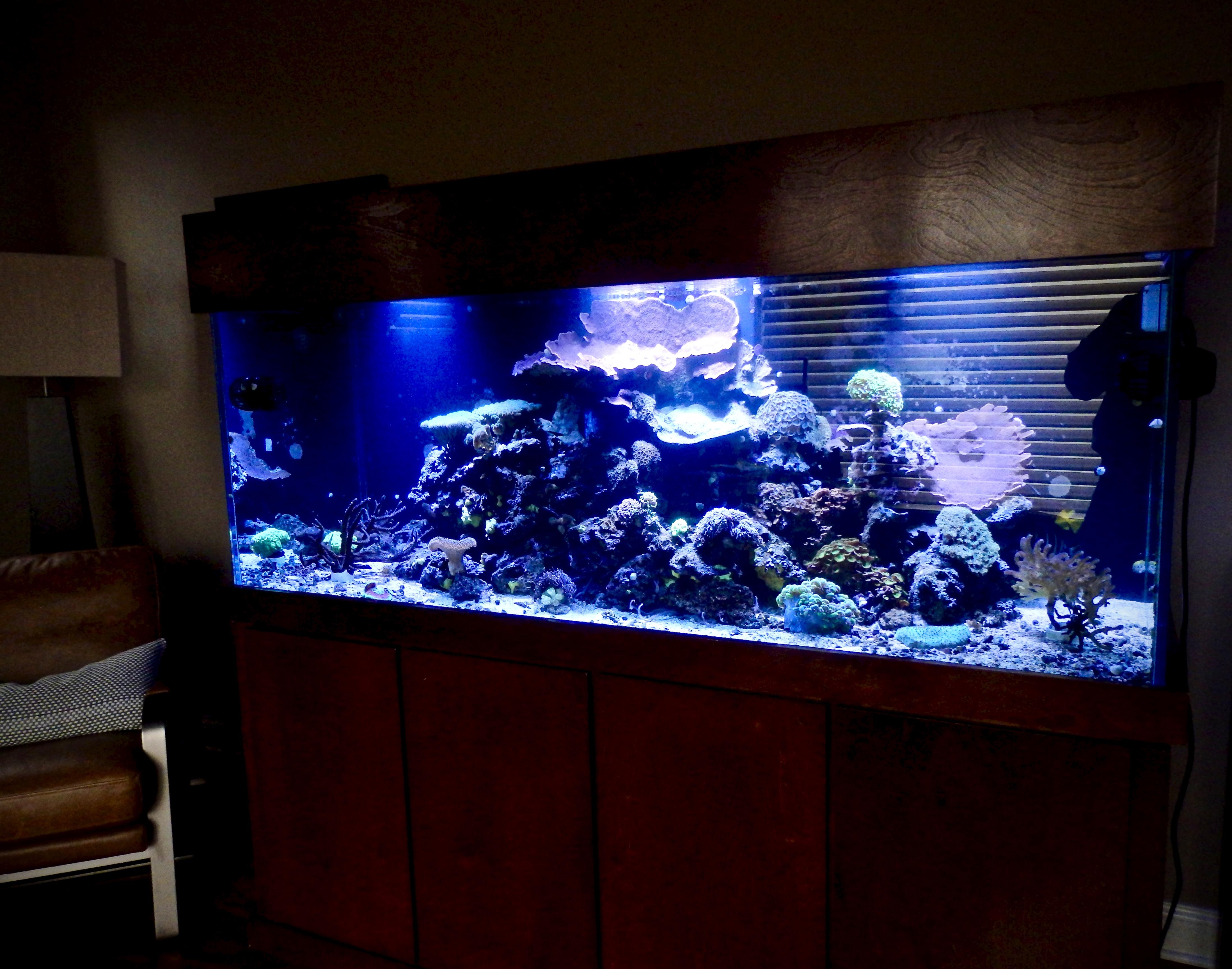 Aquarium sales, service & leasing   Aquatic World  