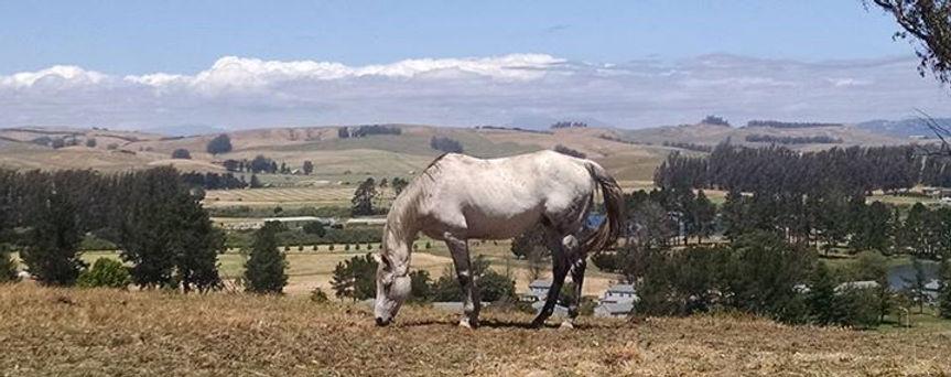 horse against panoramic