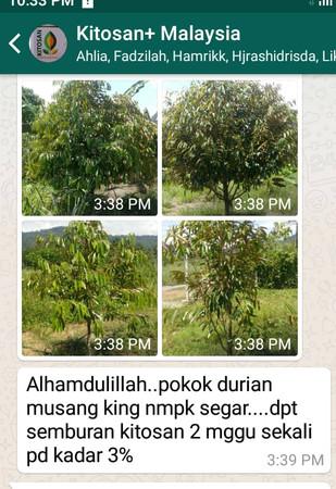 durian segar.jpeg