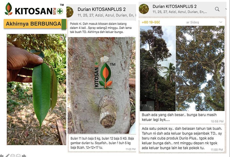 kitosanplus durian