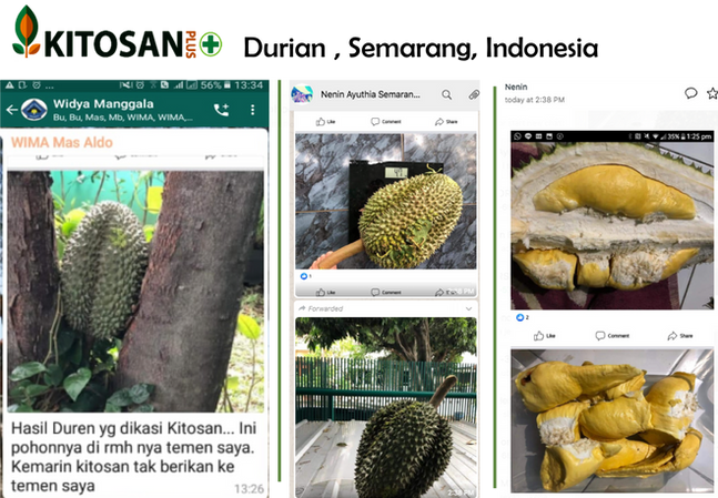 durian semarang.png